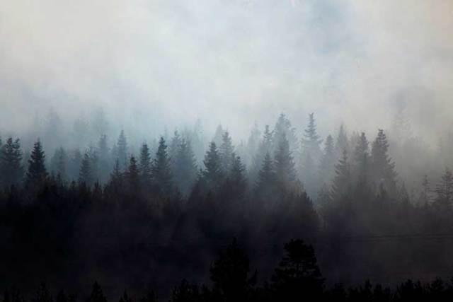 Краткое содержание Гайдар Дым в лесу за 2 минуты пересказ сюжета