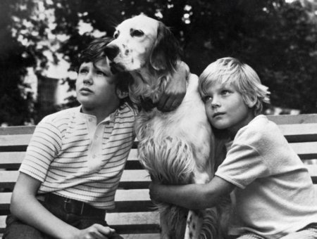 Краткое содержание Толстой Бешеная собака за 2 минуты пересказ сюжета